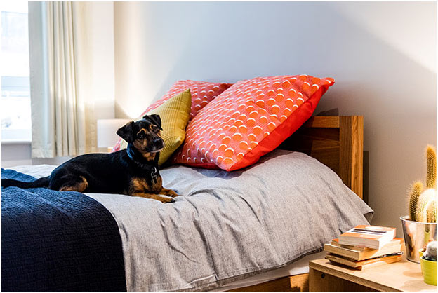 Pet-friendly homes with no fees, 3-year tenancies & on-site concierge shaping the future of rental sector in London