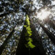 Fund nature protection now or face huge losses, says World Bank 46