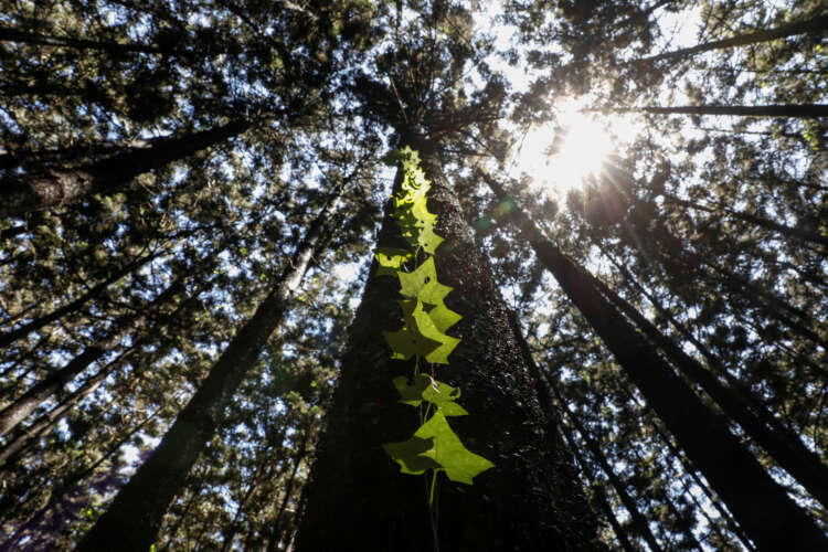 Fund nature protection now or face huge losses, says World Bank 41