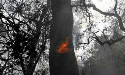 Wildfire engulfs houses in suburbs of Athens 17