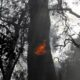 Wildfire engulfs houses in suburbs of Athens 42