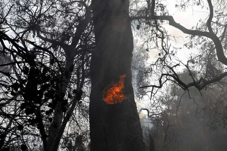 Wildfire engulfs houses in suburbs of Athens 41